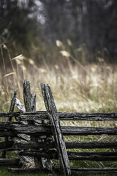 The Fence by Ann Sharpe