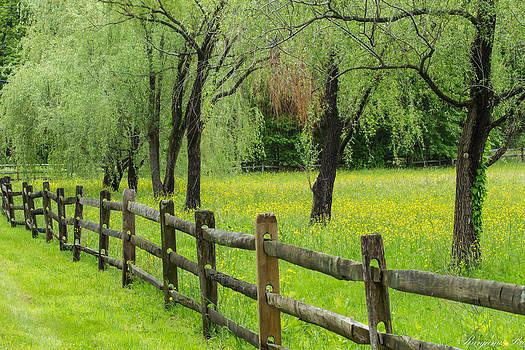 The Fence by Ranjana Pai