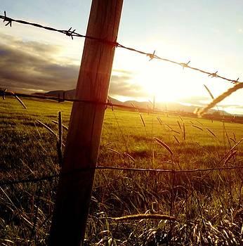 Sarah Pemberton - The Fence