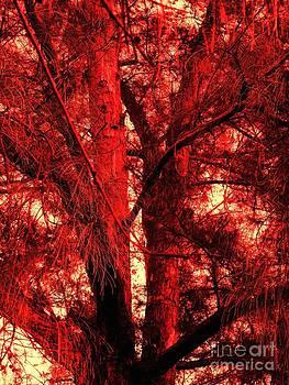 The Fiery Glowing Tree  by Debb Starr