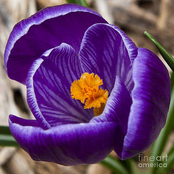 The First Sign of Spring by Jaclyn Burns