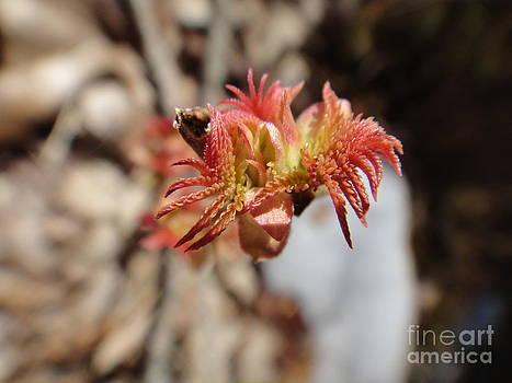 The First Spring Flower by Ara Wilnas