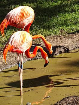 The Flamingo by Nelin Reisman