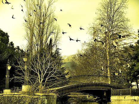 Rick Todaro - The Flock Near Bridge