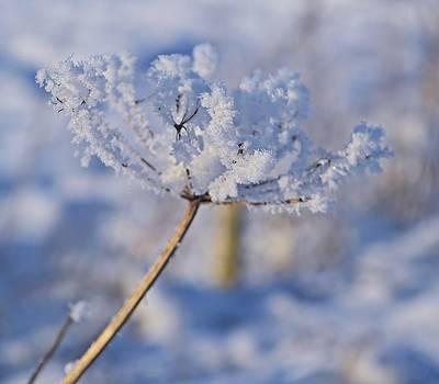 The Flower Crystal by Dave Woodbridge