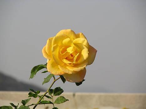 The Flower by Paresh Bhanusali