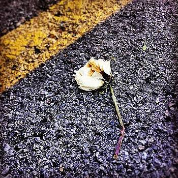 The #flower That Died (grew) From by Kross Media