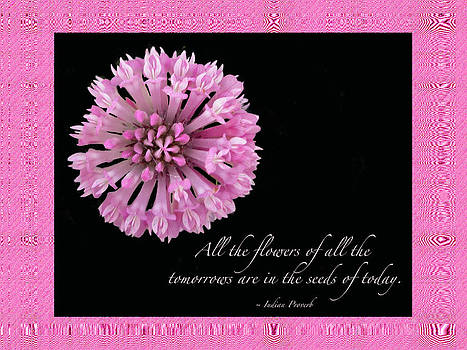 Mother Nature - The Flowers Of Tomorrow - Pink Clover With Quote