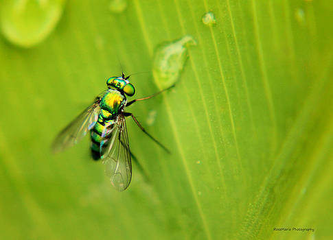 The Fly by Vanessa Parent
