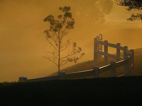 The Fog by Oscar Alvarez Jr