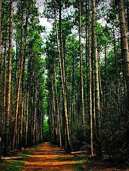 The forest avenue by Slawek Sepko