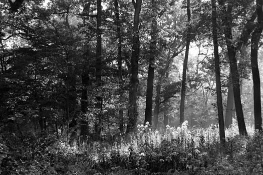 Rosanne Jordan - The Forest Comes Alive at Daybreak