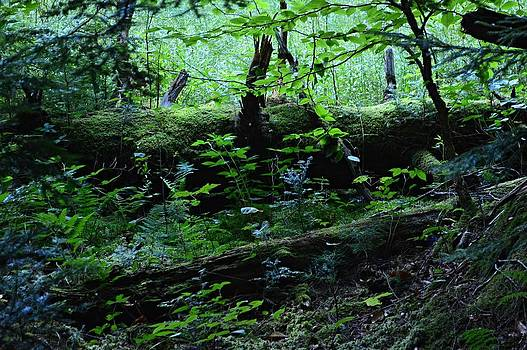 The Forest Floor by Sharon L Stacy