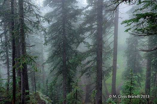 The forest through the mist by M Chris Brandt