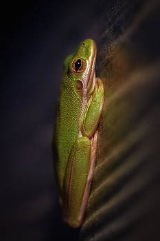 The Frog by Frank Somma