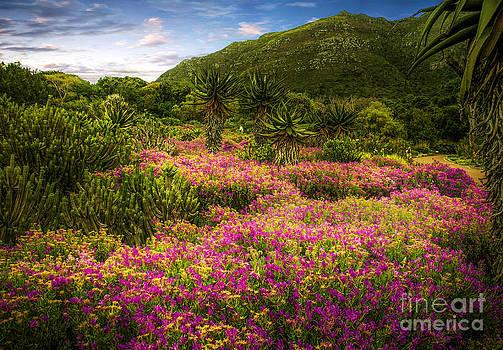 The Garden of Eden by Daniela White