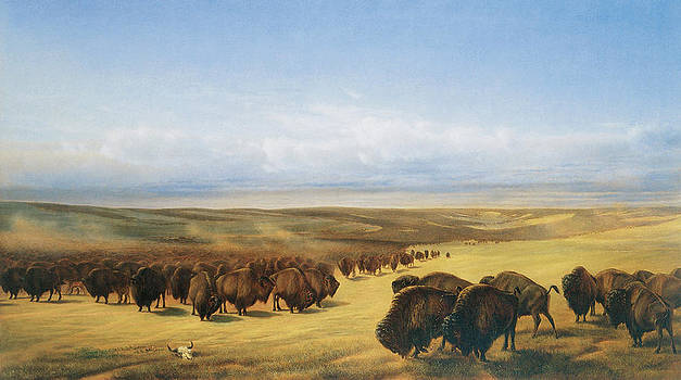 William Jacob Hays - The Gathering of the Herd