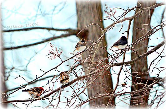 The Gathering by Sheila Noren
