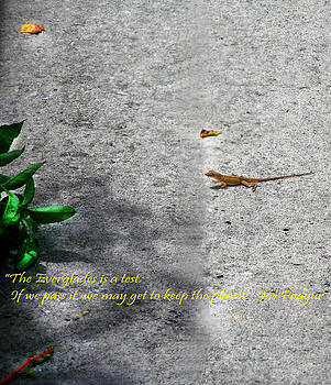The Gecko by Judy Paleologos