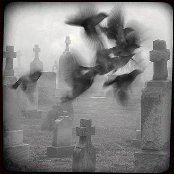 Gothicrow Images - The Ghost Birds