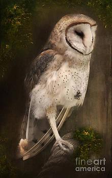 The Ghost Owl by Lynn Jackson