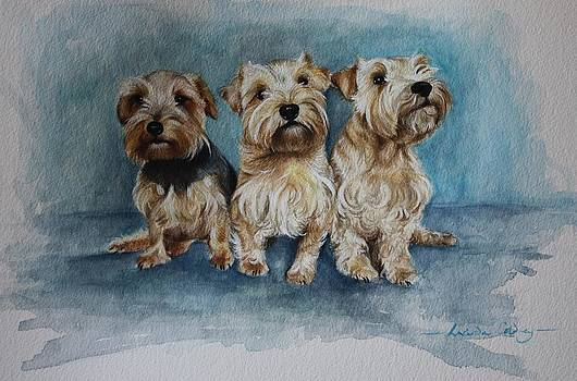 The girls by Lucinda Coldrey
