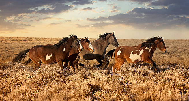 The Girls On The Range by Robin  Wadhams