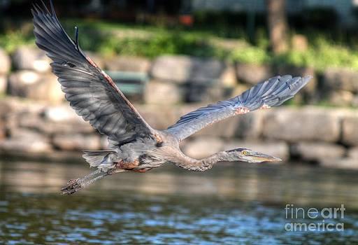 The Glider by Skye Ryan-Evans