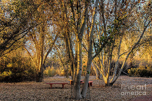The Golden Hour by Tammy Espino