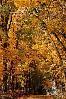 Linda Shafer - The Golden Wooded Road
