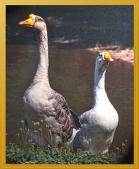 The Goose and The Gander by Patricia Keller