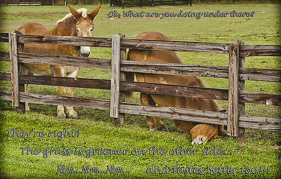 The Grass is Greener by Shirley Tinkham