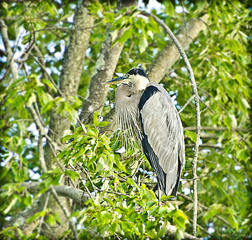 The Great Blue Heron by Shirley Tinkham