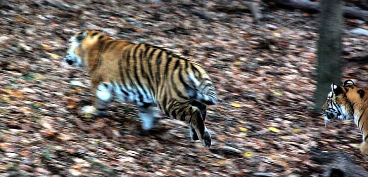 Ramabhadran Thirupattur - The Great Chase