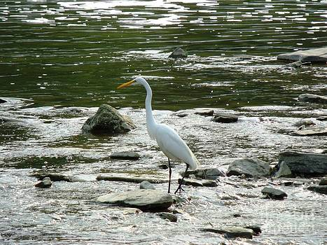 The Great Egret 1 by Leslie Jennings