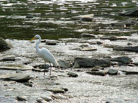 The Great Egret 2 by Leslie Jennings