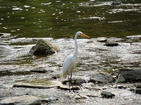 The Great Egret 3 by Leslie Jennings