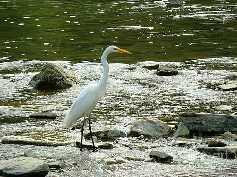 The Great Egret 4 by Leslie Jennings