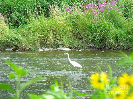 The Great Egret 5 by Leslie Jennings