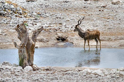 The great Kudu  by Juergen Klust