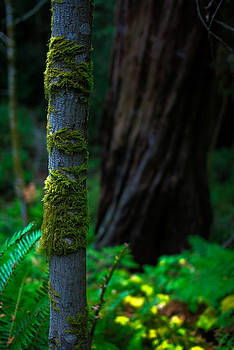 The Green Clings by Ian Wilson