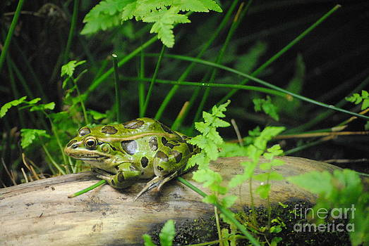The Green Frog by TChamberlin Photography