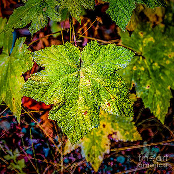 Jon Burch Photography - The Green Leaves of Summer