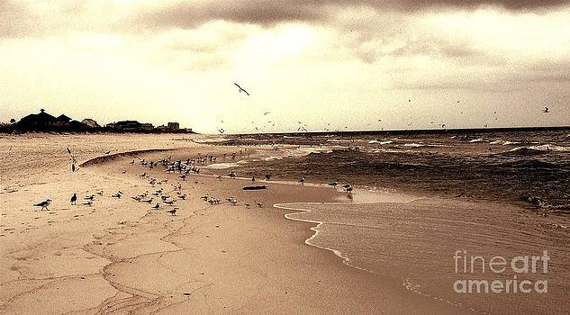 The Gulls Taking the Beach by Garren Zanker