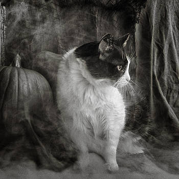 The Halloween Cat by Katie Abrams