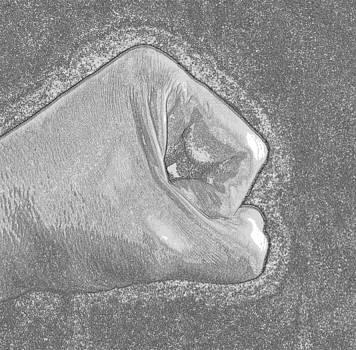 The Hand by Michael Sokalski