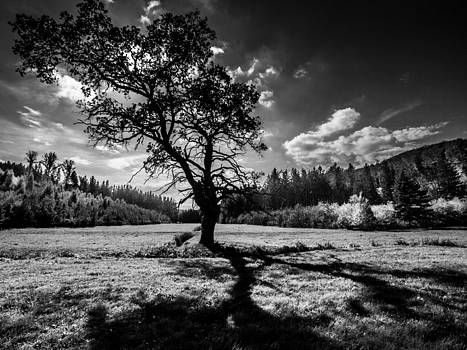 The Hanging Tree by Davorin Mance