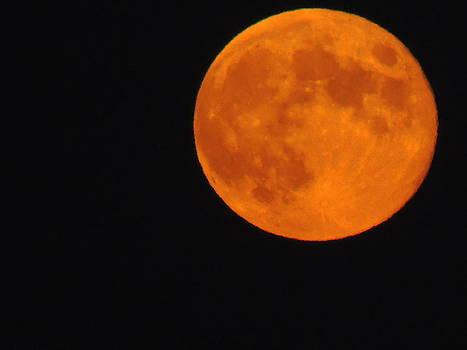 Anastasia Konn - The Harvest Moon in Orange