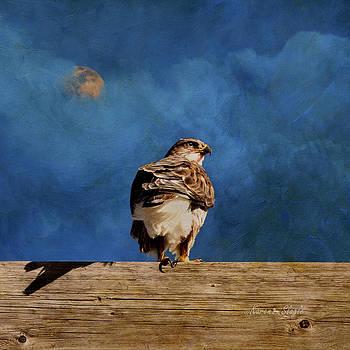 Karen Slagle - The Hawk