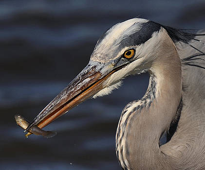 The Heron and The Minnow by Angel Cher